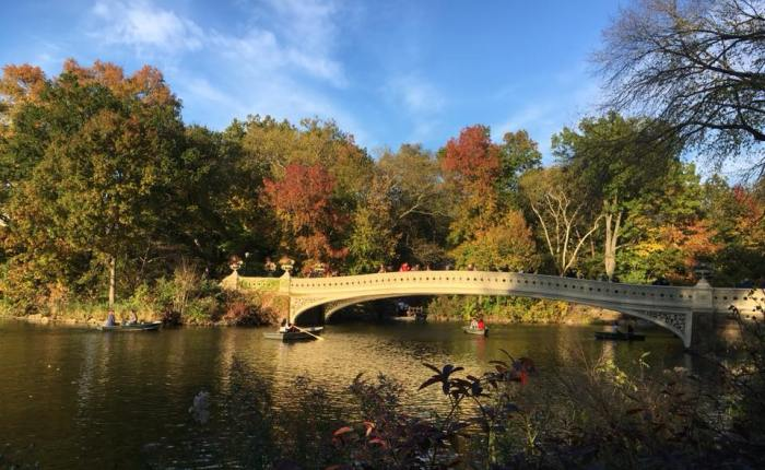 Chapter Two: Elsewhere… The Frogs of CentralPark